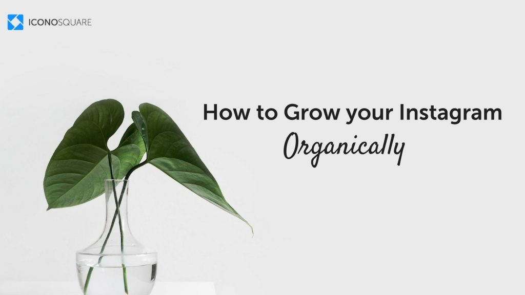 7 Ways to Grow Your Instagram Organically